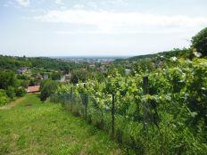 G. Stenjevec, Dubravica, 1043m2, vinograd i oranica, pogled!